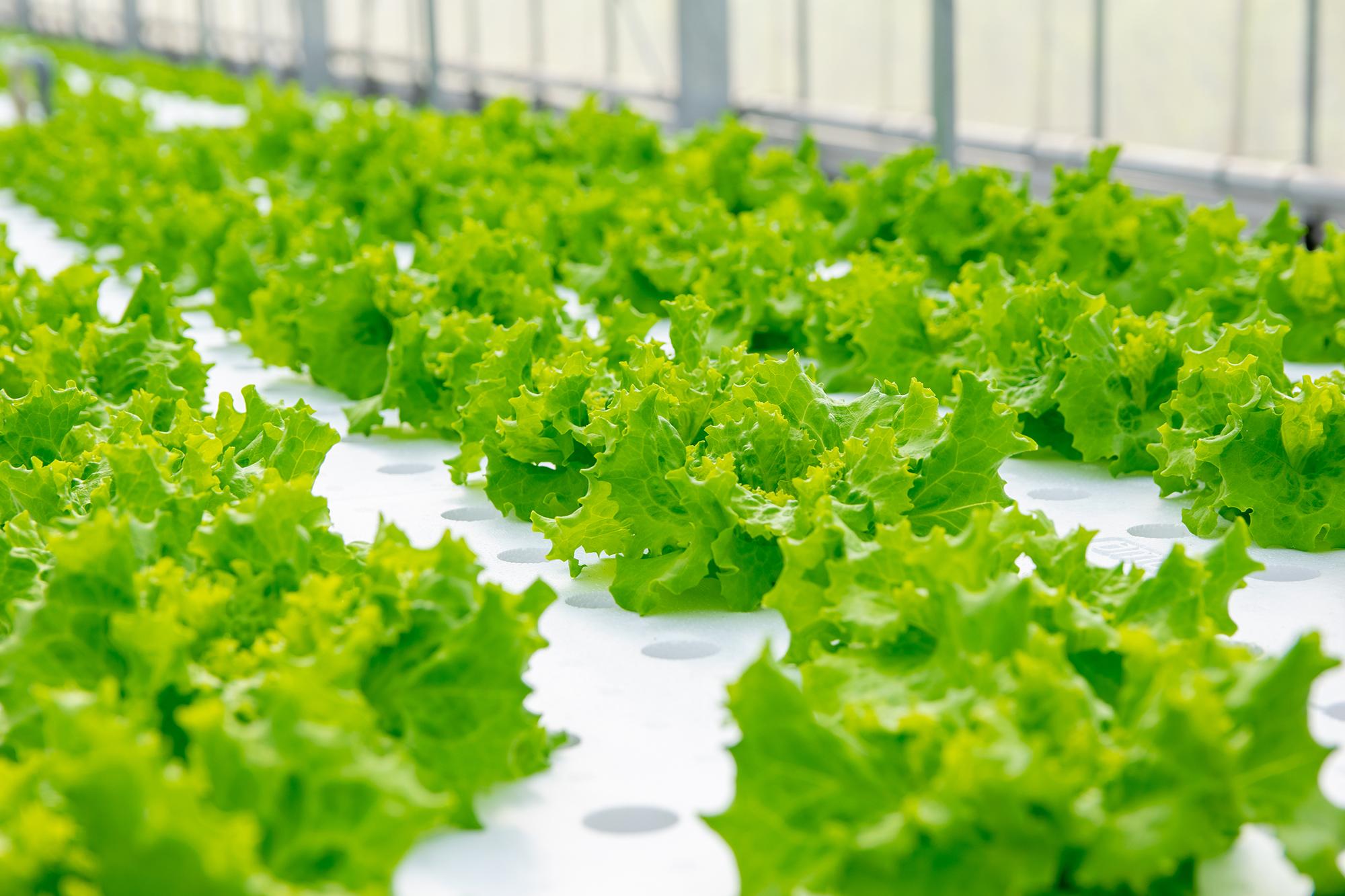 農産物生産事業