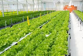 農産物事業